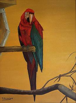 Macaw of the Canary Island by Jose Luis Villagran Ortiz