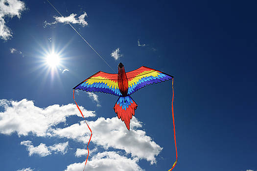 Reimar Gaertner - Macaw Parrot Kite flying against the sun with a blue sky in Toro