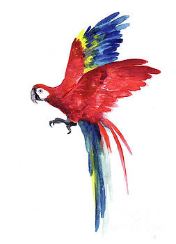 Macaw Parrot Watercolor Painting, Tropical Art Print Red Blue Feathers Living Room Wall Illustration by Joanna Szmerdt