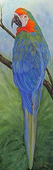 Macaw  by Sandra Cutrer