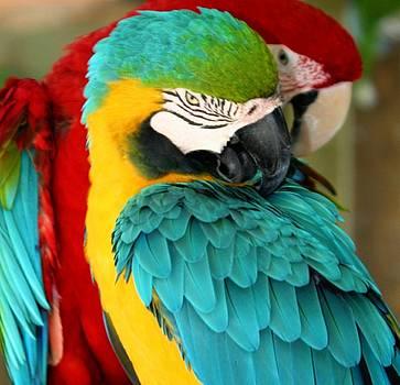 Macaws at Jungle Gardens XX by Sheryl Unwin