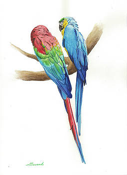 Macaws by Sarah Glass Bevard
