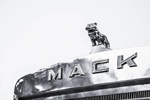 Lisa Lemmons-Powers - Mack Bull Dog