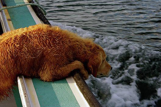 Mackerel Fishing Dog by Paul Wash