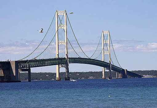 Mackinac Bridge  by Danielle Allard