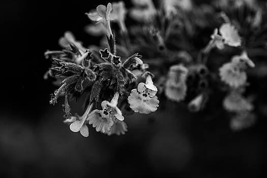 Macro Flora by Kaos Studios