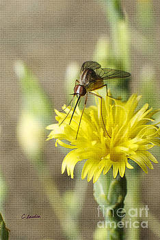 Macro Photography of a Mosquito over a Lettuce Flower by Claudia Ellis