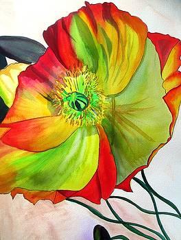 Macro Poppy by Sacha Grossel