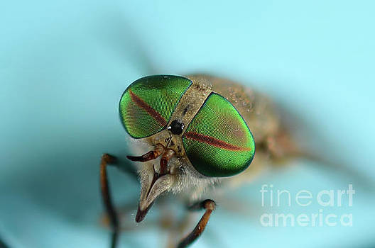 Macros Fly by Melissa Fague