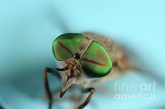 Macros Fly by Melissa Fague