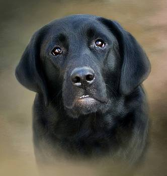 Macy-Portrait of a Black Lab by Stephanie Calhoun