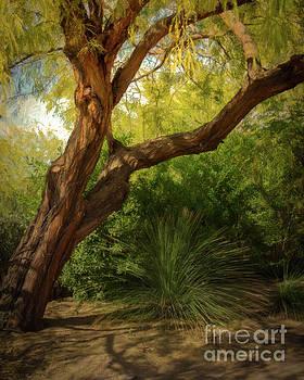 Jon Burch Photography - Made in the Shade