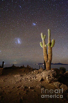 Magellanic Clouds and Forked Cactus Incahuasi Island Bolivia by James Brunker