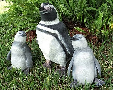 Magellanic Penguin and Chicks H by Chris Dixon