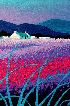 Magenta Blossoms  by John  Nolan