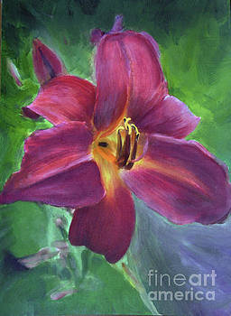 Magenta Daylily by Donna Walsh