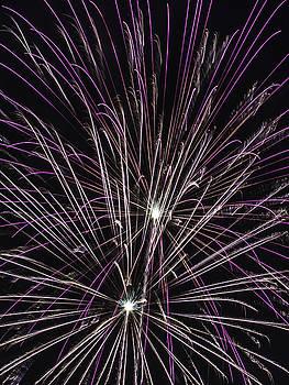 Paula Porterfield-Izzo - Magenta Feathers of Fireworks