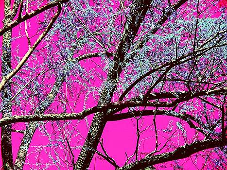Magenta Sky by Tommy Carhart