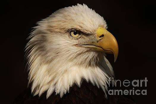 Paulette Thomas - Magestic Eagle