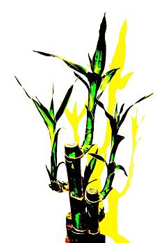 Magic Bamboo PZ by Daniel Thompson