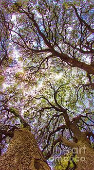Michael Tidwell - Magic Canopy