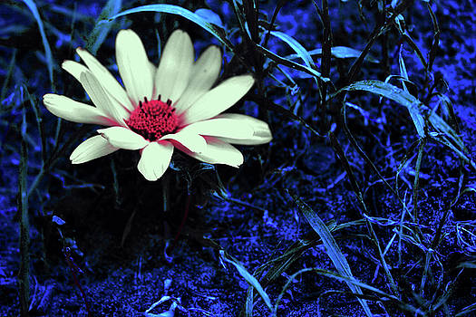 Magic Flower by Mariia Sorokina