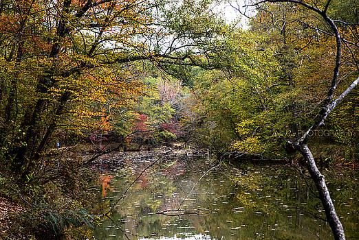 Magic Forest by Nena Pratt