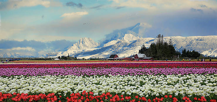 Magic Landscape 1 - Tulips by Rick Lawler