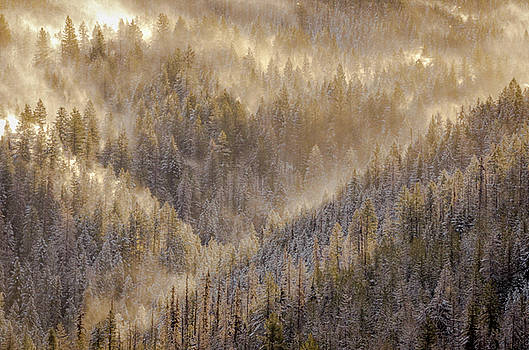 Magic Mountain by Joy McAdams