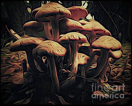 Magic Mushrooms by John Eide