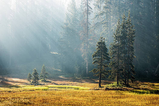 Magic of morning sun by Davorin Mance