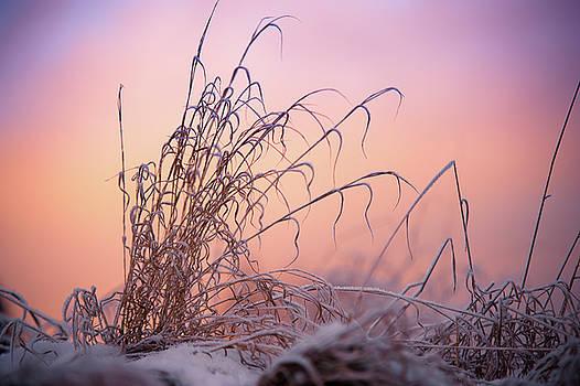 Jenny Rainbow - Magic Winter Moments
