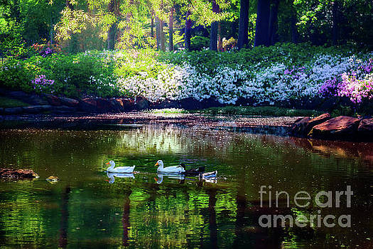Magical Beauty at the Azalea Pond by Tamyra Ayles