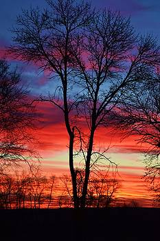 Magical Colors in the Sky by Dacia Doroff