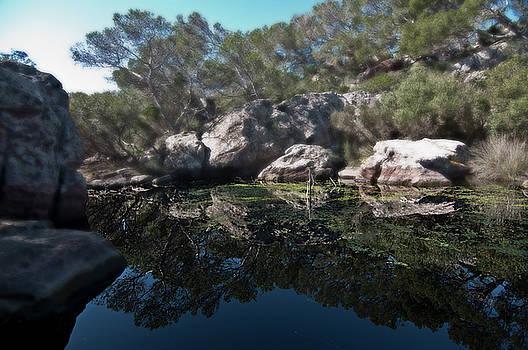 Pedro Cardona Llambias - Magical green pond