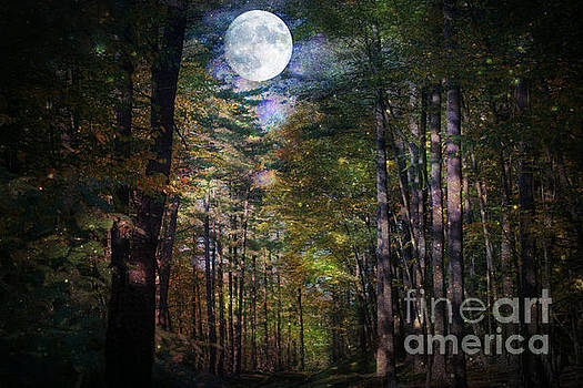Magical Moonlit Forest by Judy Palkimas