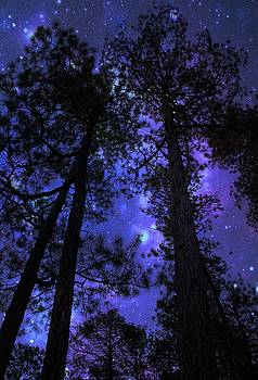 The Trees Have Magic by Kimmi Craig