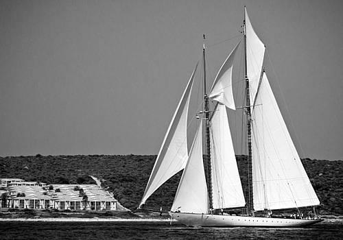 Pedro Cardona Llambias - Magical wings regatta arrives to coastline with full sails open by pedro cardona