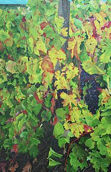 Magione Vineyard 4 by Steven Fleit