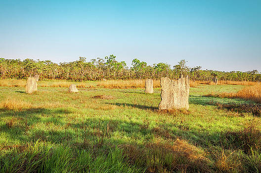 Magnetic termite Mounds in Litchfield National Park by Daniela Constantinescu