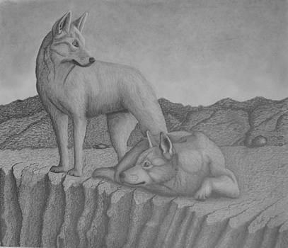 Magnificent Dingo by Brian Leverton