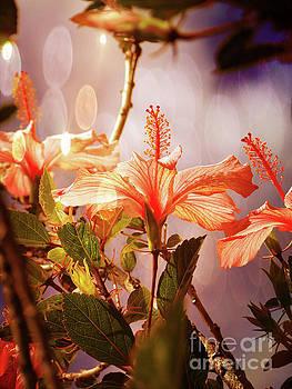 Magnificent Hibiscus II by Al Bourassa