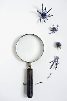 Magnifying Glass And Blue Thistle by Di Kerpan