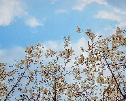 magnolia III by Hyuntae Kim