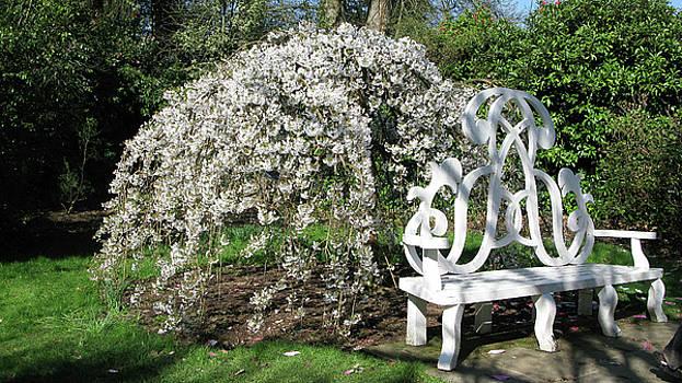 Magnolia by Maria Joy