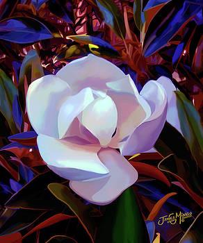 Magnolia 2 by James  Mingo