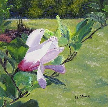 Lea Novak - Magnolia at Sayen Gardens
