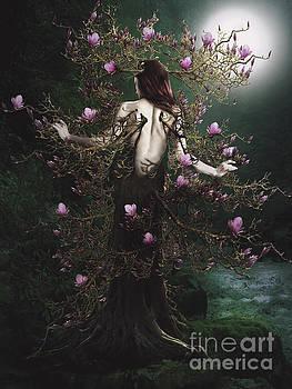 Magnolia by Babette Van den Berg