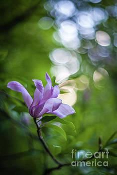 Mike Reid - Magnolia Bloom Effervescence