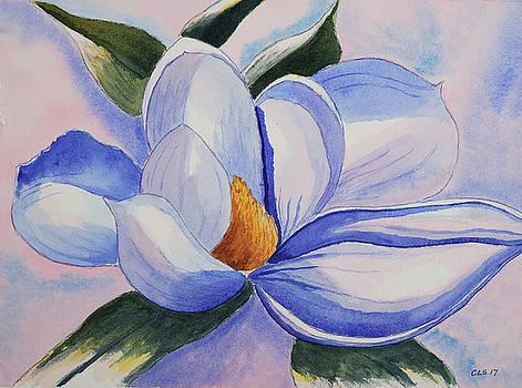 Magnolia Blossom at Dawn by Cynthia Schoeppel